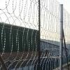 Забор из плоской Егозы